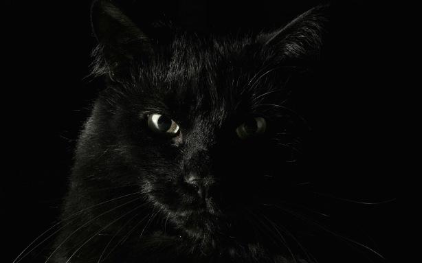 Big-black-cat.jpg